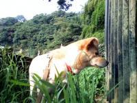 小川を眺める花!