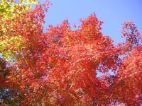 紅葉している木もチラホラ