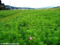 syokuba2008091906.jpg