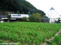 syokuba2008091907.jpg