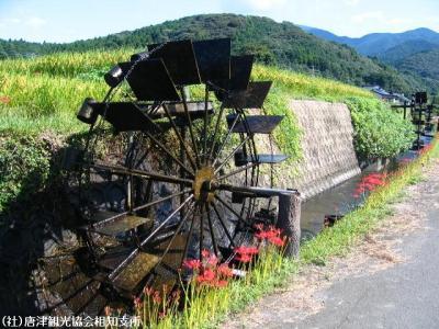 tyogiri2008091901.jpg