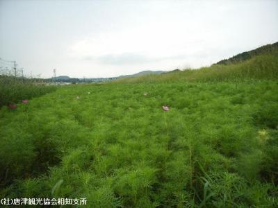 yamasaki2008091101.jpg