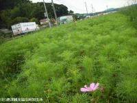 yamasaki2008091102.jpg