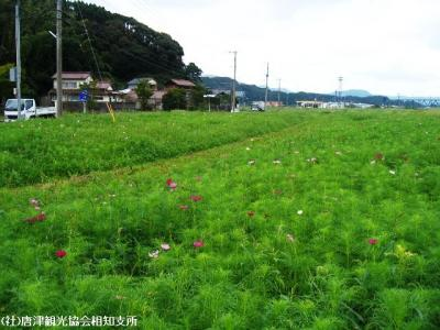 yamasaki2008091901.jpg