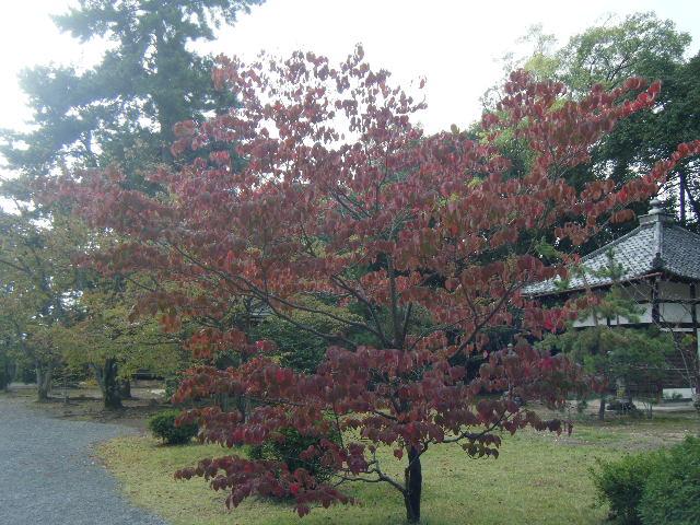 2010_1031京都第2弾0041