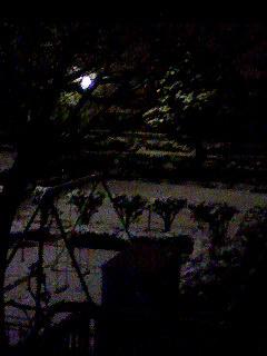 100201_2324~001 snow