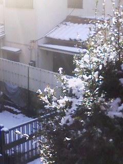 100202_0803~001 雪2年ぶり