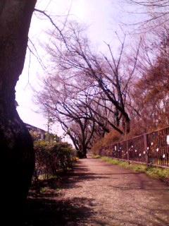 100303_1215~001 桜並木