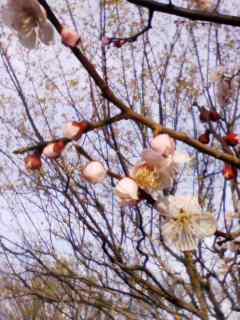 100305_1600~001 薄桃色の蕾