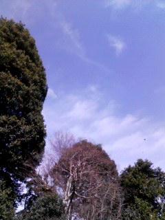 100303_1225~001 春の空