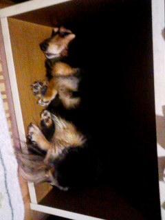 100707_0012~001 ボックス犬