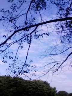 100726_0621~001 枝&空&雲