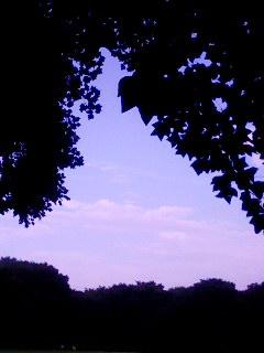 100726_0616~001 三葉のフレームで空を覗く