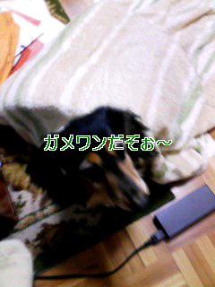 100324_1650~001_t へーんしんガメワン!!