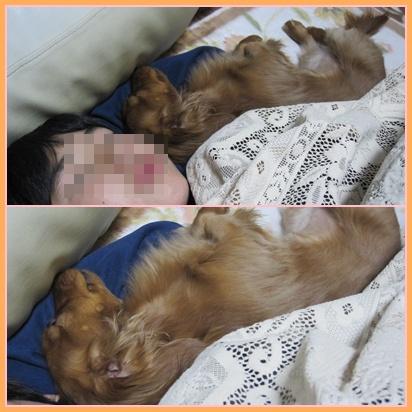 cats_20100215222355.jpg
