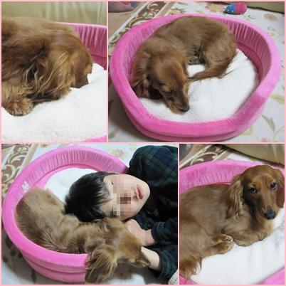 cats_20100330225256.jpg