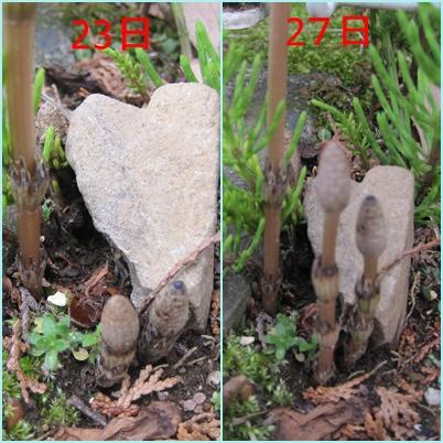 cats_20100330231313.jpg