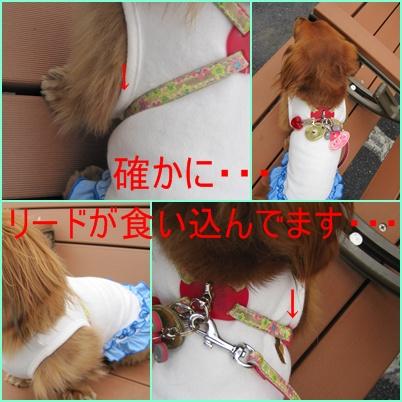 cats_20100427220314.jpg