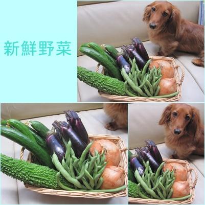 cats_20100721220845.jpg