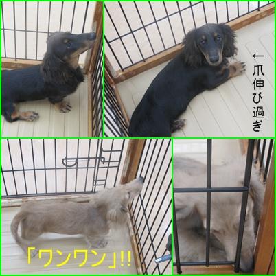 cats_20100801135209.jpg