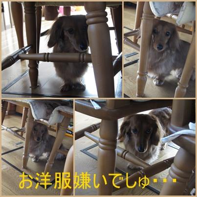 cats_20110427174256.jpg