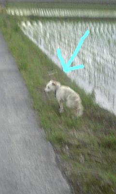 のら犬追跡2