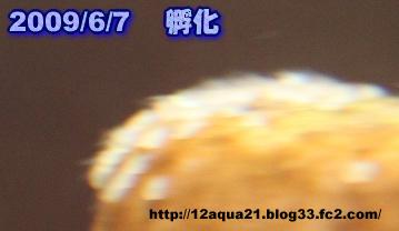 0_20090608003654.jpg