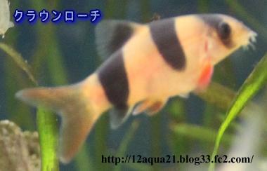 10_20090527092359.jpg
