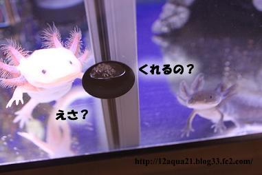 1_20090521230456.jpg