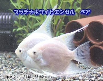 1_20090608004104.jpg