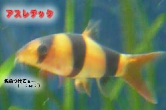 24_20090319222235.jpg