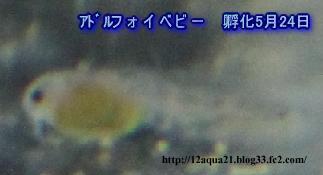 3_20090524221047.jpg