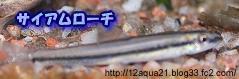 5_20090514220047.jpg
