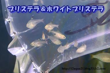 8_20090514215927.jpg