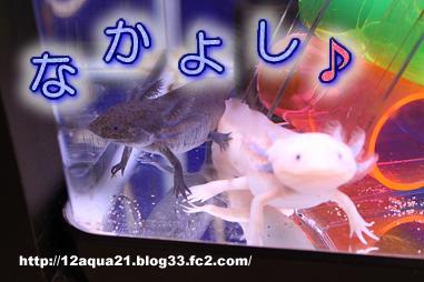 8_20090618084836.jpg