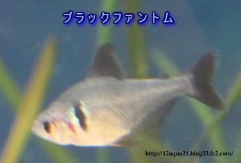 9_20090527092353.jpg