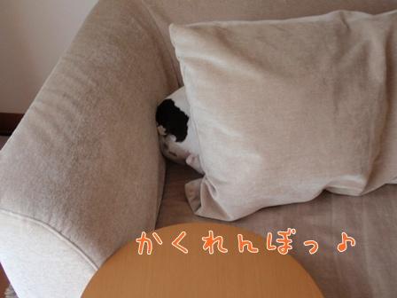 P9071208.jpg