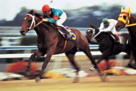 20051001-kyoto15.jpg