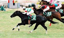 20051225-kyoto3.jpg
