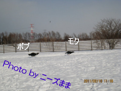 IMG_0034_1 2