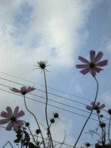 20090921伊勢原08