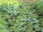 20091004泉の森06