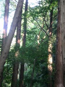 20091004泉の森03