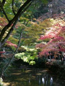 20091123小國神社01