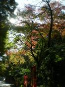 20091123油山寺10