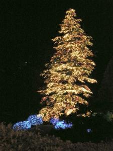 20091217玉川学園ツリー