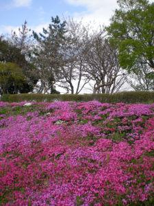 20100417相模川芝桜まつり02