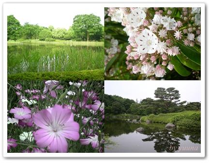 F20100522昭和記念公園02
