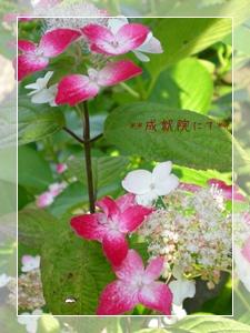 F20100606鎌倉散策08