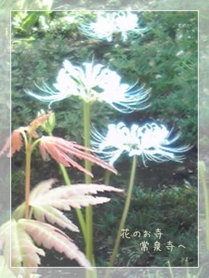 F20100911常泉寺01
